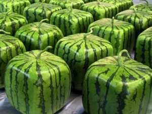 Watermelon Health Benefits and Disadvantages